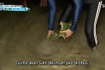 The Law of the Jungle in Palawan (2020) Episode Episode 415